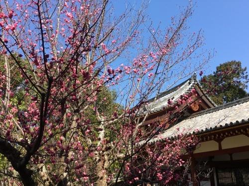 京都・奈良 冬の旅\'20 その5_e0326953_16044321.jpeg