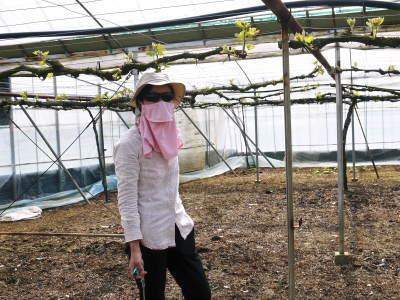 熊本ぶどう 社方園 芽吹き2020 前編:匠の芽キズをつける作業で今年も良い芽が芽吹きました!_a0254656_17260536.jpg