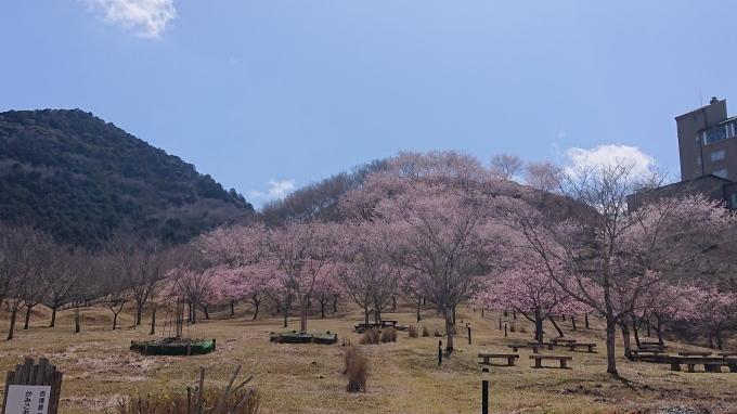 桜とスパイス_b0328361_21473248.jpg