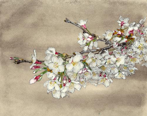桜_f0189164_16564902.jpg