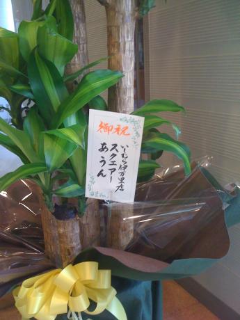 幸福の木に花が💐_a0077071_17035838.jpg