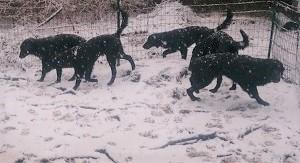 またまた雪でした。。。_b0084194_19445932.jpg