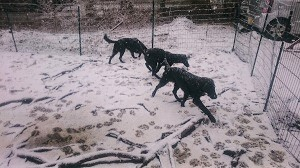 またまた雪でした。。。_b0084194_19451889.jpg