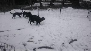 またまた雪でした。。。_b0084194_19503198.jpg