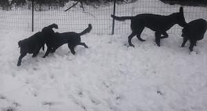 またまた雪でした。。。_b0084194_19505023.jpg
