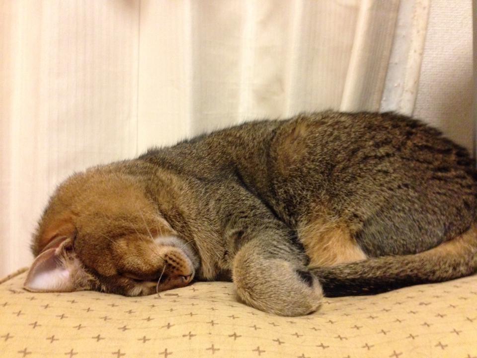 ココの寝姿_f0061797_12204996.jpg