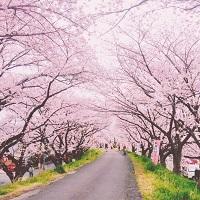 【ギフト券プレゼント】春よ来いコンテスト