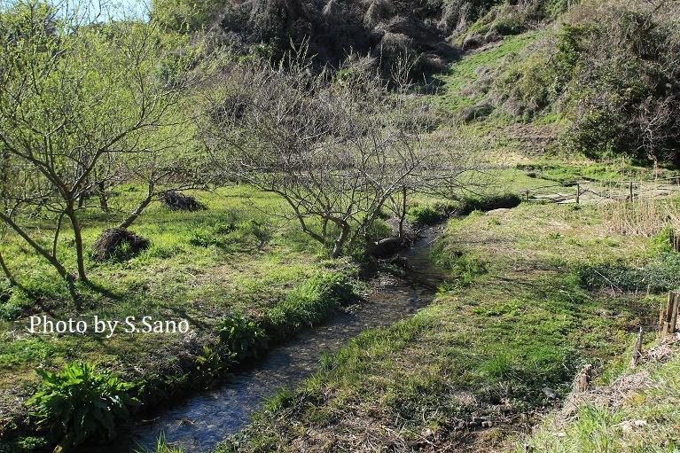 三浦半島の里山(2020年3月)_b0348205_10481679.jpg
