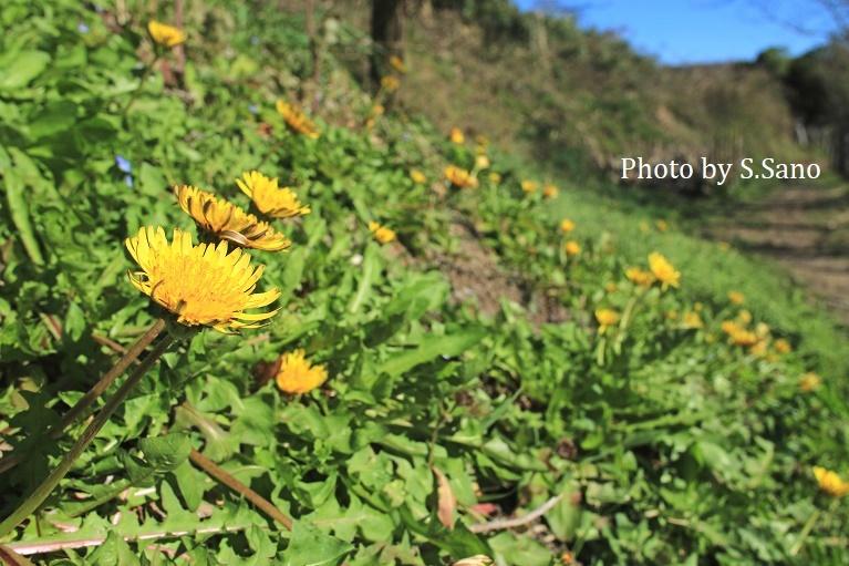 三浦半島の里山(2020年3月)_b0348205_10482164.jpg