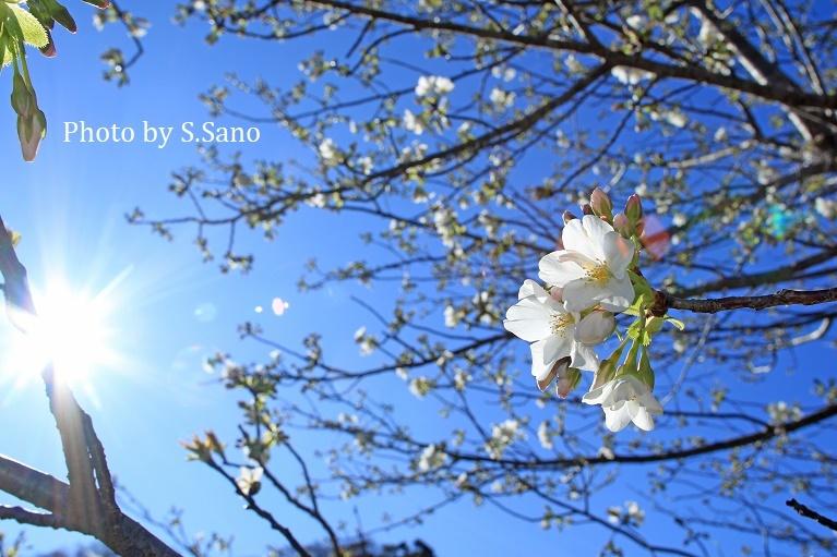 三浦半島の里山(2020年3月)_b0348205_10482770.jpg