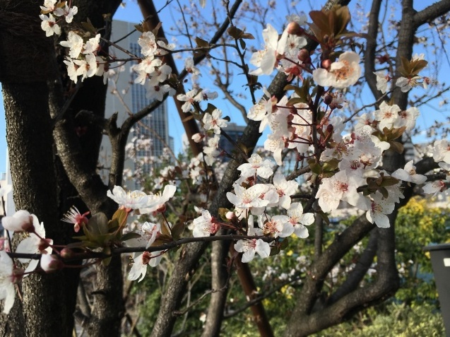 春の歌  NO.677_c0102513_15515824.jpeg