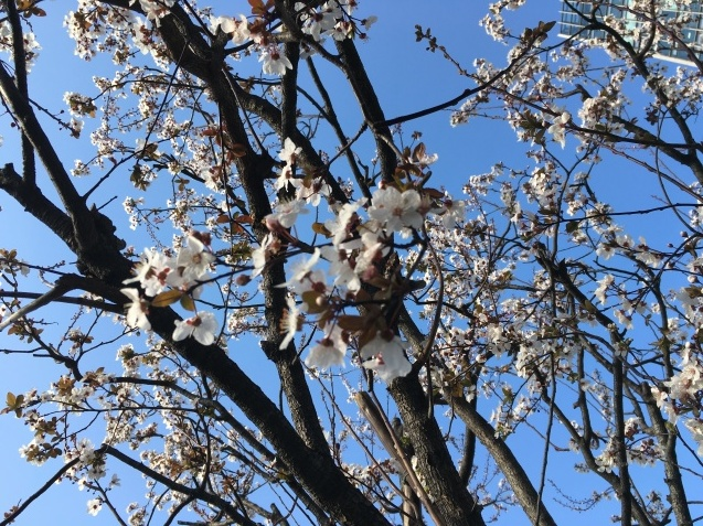 春の歌  NO.677_c0102513_15522706.jpeg