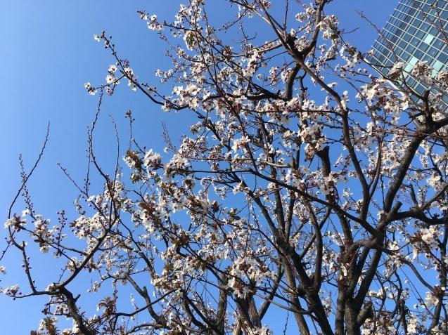 春の歌  NO.677_c0102513_15524614.jpeg