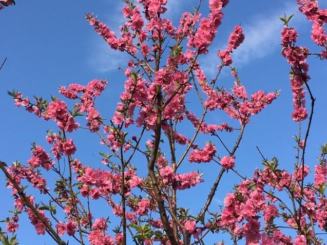 春の歌  NO.677_c0102513_15530425.jpeg