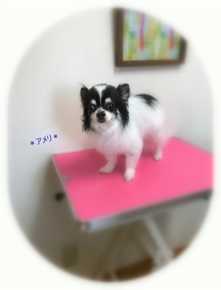 ココモくん&アメリくん_a0315823_19501733.jpg