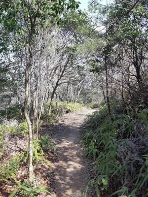 大仏山 新コース発見_f0129726_19124645.jpg