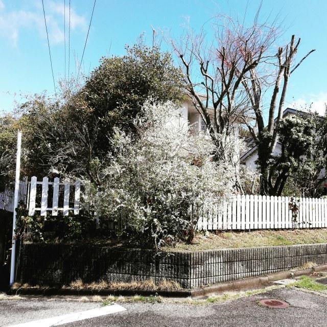 庭の木々_b0207631_11535970.jpg