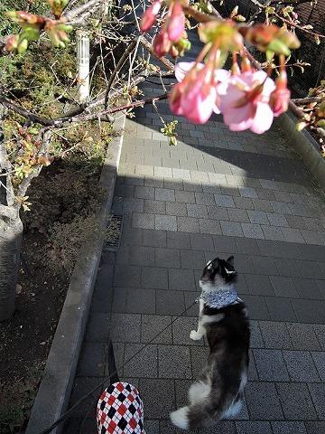 散歩屋日誌【37】_c0062832_15094315.jpg