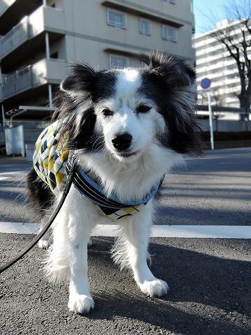 散歩屋日誌【37】_c0062832_15094378.jpg