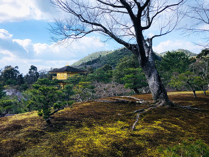 金閣寺 / iPhone 8_c0334533_20104725.jpg