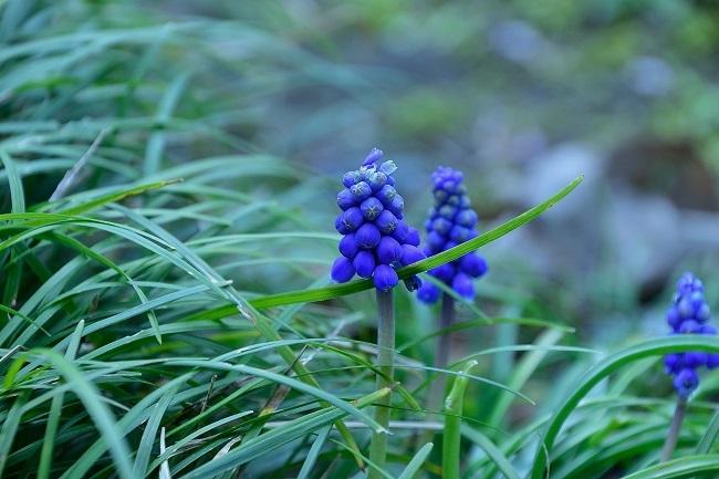 庭園の春_d0264733_16150055.jpg