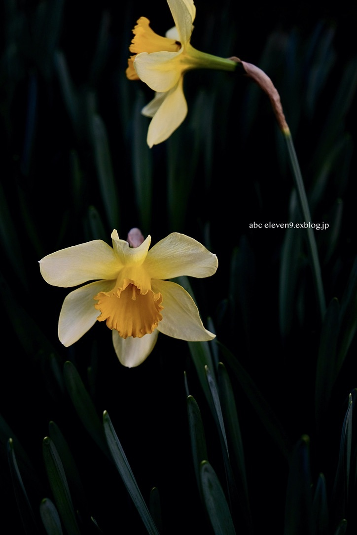 spring flower_f0315034_14421261.jpeg