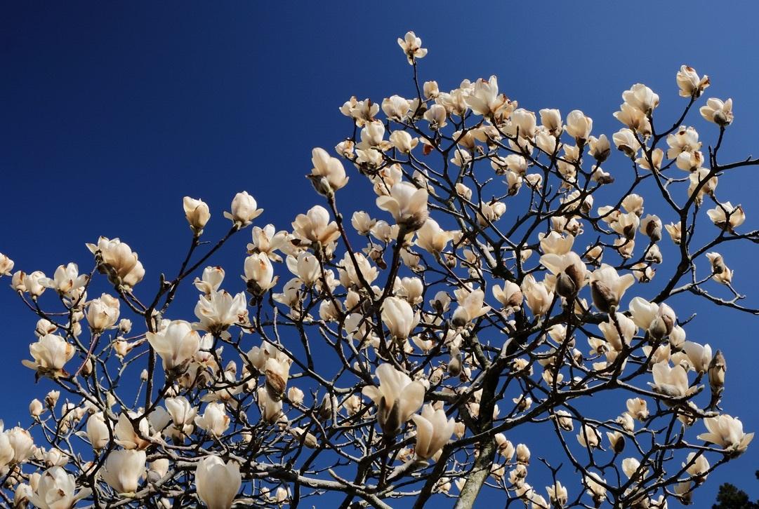 spring flower_f0315034_14423895.jpeg