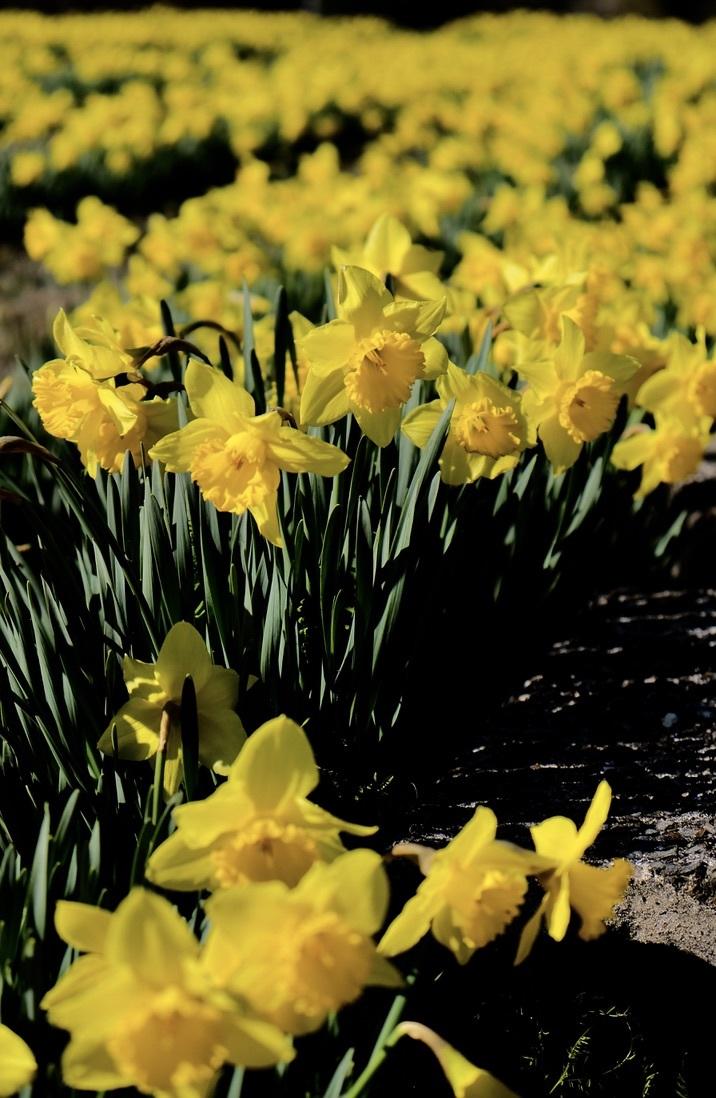 spring flower_f0315034_14431089.jpeg