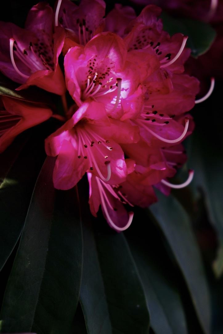 spring flower_f0315034_14432758.jpeg