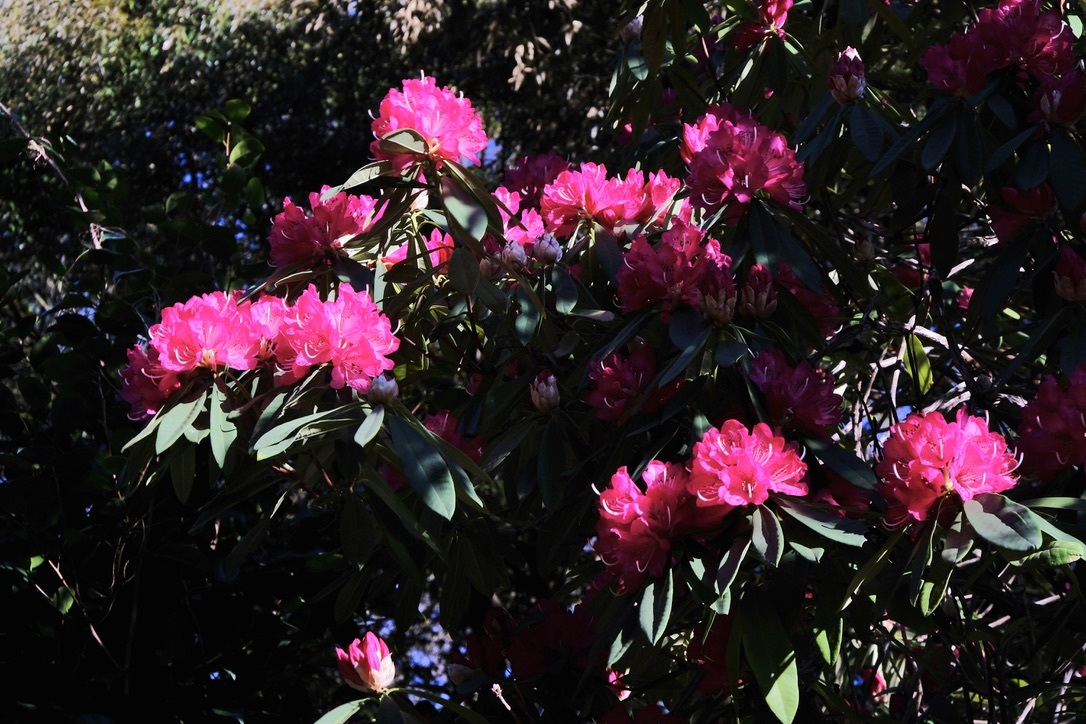 spring flower_f0315034_14433217.jpeg