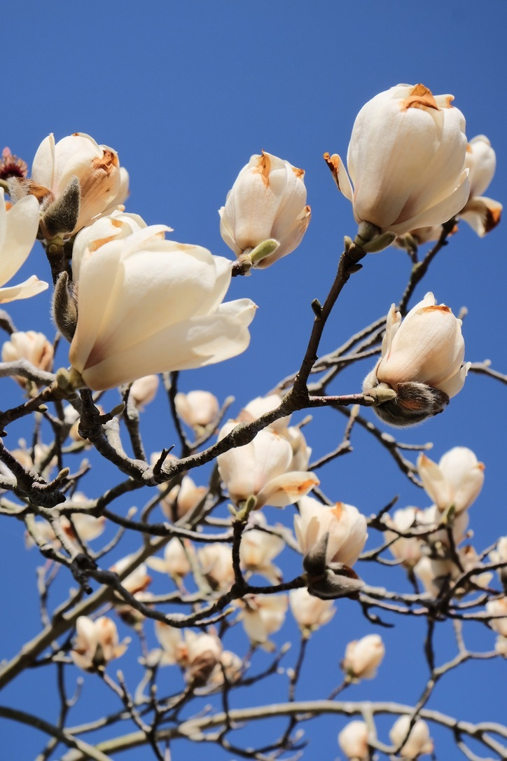 spring flower_f0315034_14435411.jpeg