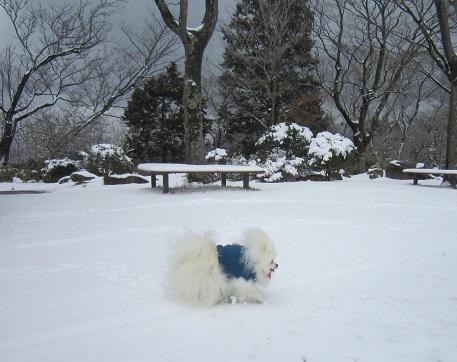 六甲山に雪が降ったよ~♪(2)_b0177436_20575375.jpg