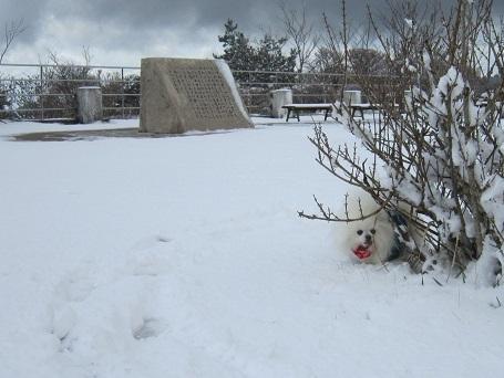 六甲山に雪が降ったよ~♪(2)_b0177436_20585878.jpg