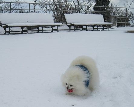 六甲山に雪が降ったよ~♪(2)_b0177436_20594733.jpg
