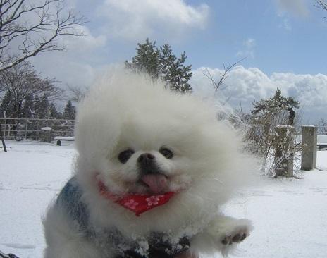 六甲山に雪が降ったよ~♪(2)_b0177436_21001149.jpg
