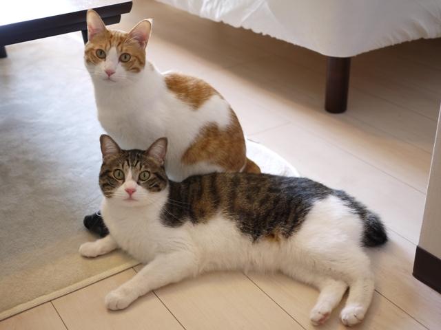 猫のお留守番 まさおくんゆきおくん編。_a0143140_21493367.jpg