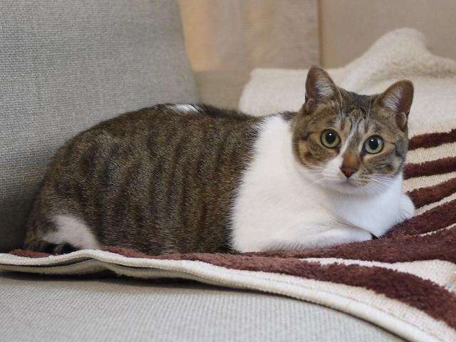 猫のお留守番 クーちゃん編。_a0143140_21521859.jpg