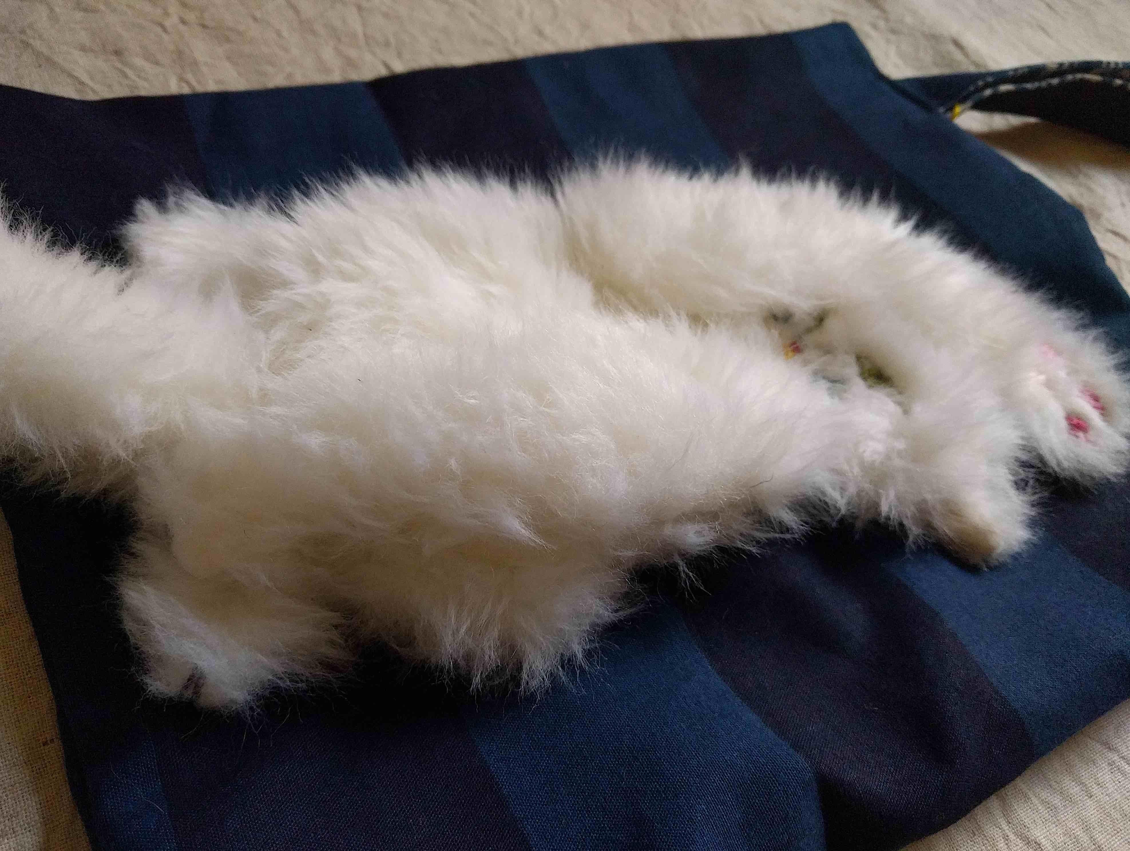 谷みゆきさんの猫パンチバッグ_a0265743_22575760.jpg