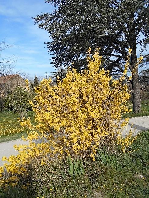 花たちが春が来たことを知らせています。_d0153860_17202479.jpg