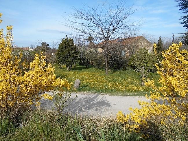 花たちが春が来たことを知らせています。_d0153860_17203261.jpg