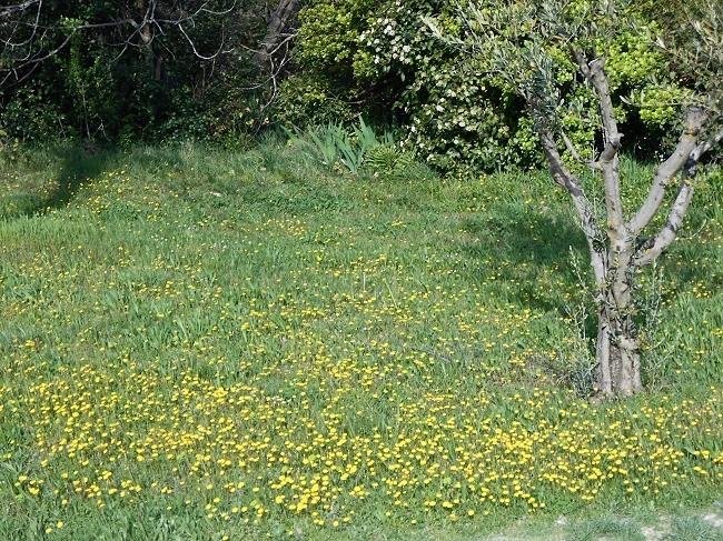 花たちが春が来たことを知らせています。_d0153860_17204556.jpg