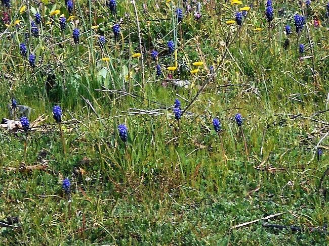 花たちが春が来たことを知らせています。_d0153860_17211945.jpg