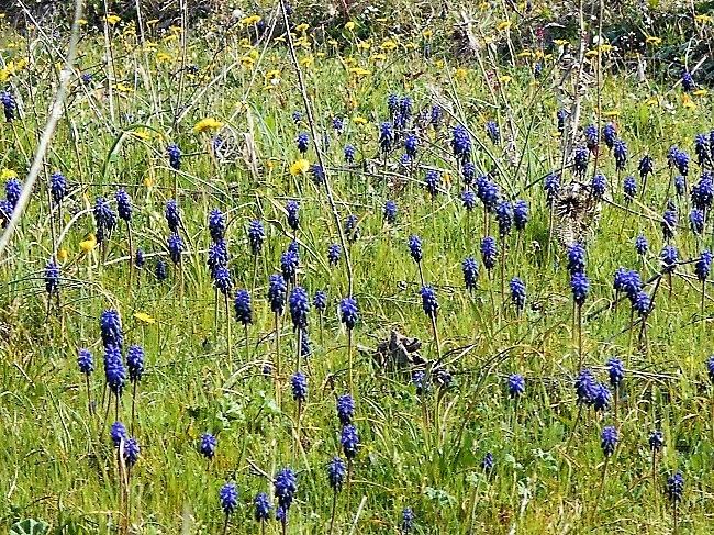 花たちが春が来たことを知らせています。_d0153860_17212856.jpg