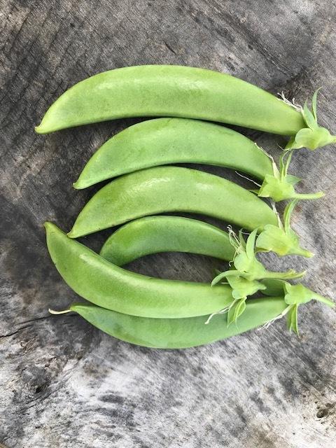 ジャガイモ発芽、スナップエンドウ初収穫3・16_c0014967_06490155.jpg