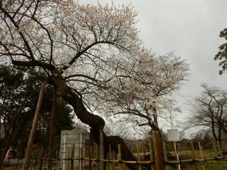 公園の梅ちゃんと黒猫たち_e0355177_20014025.jpg