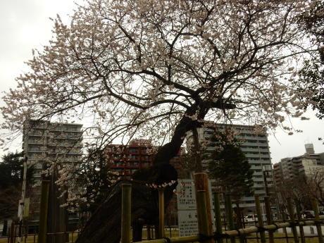 公園の梅ちゃんと黒猫たち_e0355177_20070643.jpg