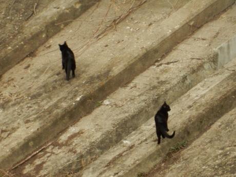 公園の梅ちゃんと黒猫たち_e0355177_20082580.jpg