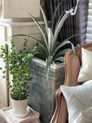 インドアグリーン 最近の我が家の観葉植物は・・・_e0237680_10284737.jpg