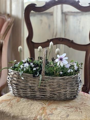インドアグリーン 最近の我が家の観葉植物は・・・_e0237680_10284769.jpg