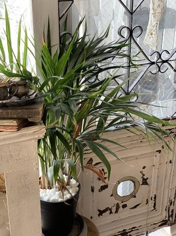 インドアグリーン 最近の我が家の観葉植物は・・・_e0237680_10284791.jpg